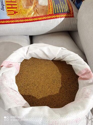 стол для настольного тенниса цена в Кыргызстан: Продаю семена люцерна Цена: договорная
