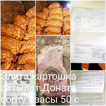 суточные квартиры в балыкчы in Кыргызстан | ПОСУТОЧНАЯ АРЕНДА КВАРТИР: Продаю семенной картошка элита 2021 года.Сорт доннато, цена 50 сом за