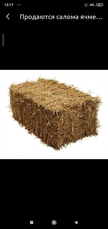 Животные - Орловка: Продаю солому пшеничная