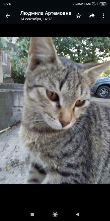 2694 объявлений: Ош. Прекрасный котик (приносит счастье в дом) ищет добрые и