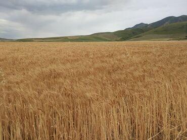 Аренда земельных участков в Бишкек: Аренда соток
