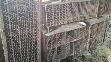 клетки для кроликов  в Бишкек