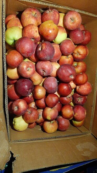 шины оптом бишкек в Кыргызстан: Яблоки превосход. Продаю оптом. Есть 500кг. Вкусные, натуральные