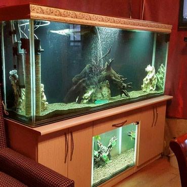Gəncə şəhərində 700 litir altinda da 1 akvarium tecili