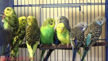 Красивые попугайчики и все товары которые нужны для них