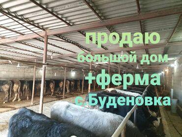 Продаю ферму+большой дом, 240м2, с удобствами, ремонт, с.Буденовка