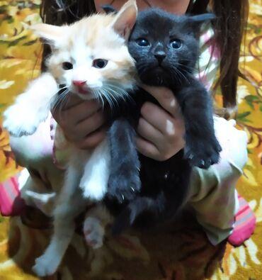 Отдам милых котят в добрые руки!Рыжий мальчикостальные