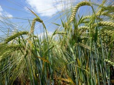 Продам 227 соток Для сельского хозяйства от собственника