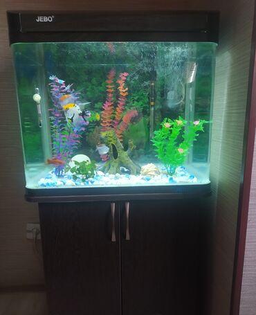 760 объявлений: Продаю действующий заводской аквариум на 100 литров вместе с тумбой
