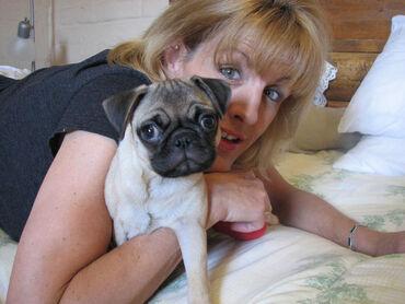 Κουτάβια pug προς πώληση WhatsApp me +33 κουτάβια pug διαθέσιμα για