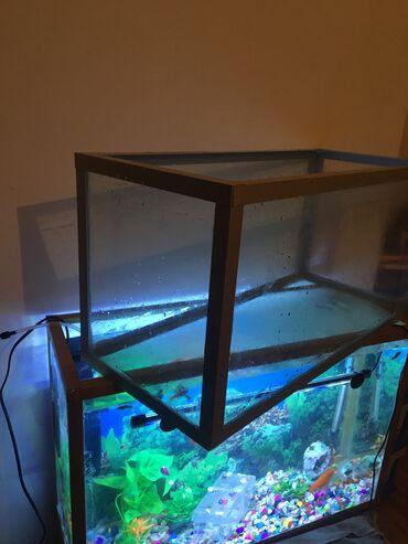 14 elan   HEYVANLAR: 60x30x25 sm olcude Akvarium satilir. Hec bir problemi yoxdur, daha