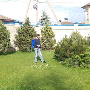 Обработка обрезка хвойных и плодовых в Бишкек