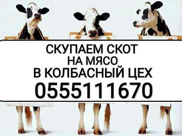 диски ланос r 14 в Кыргызстан: Https://www.drive2.ru/r/nissan/cefiro/90273