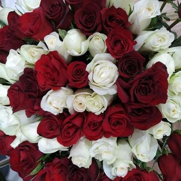 51 шт белых и 50 шт красных сочных шикарных свежих роз собранные по