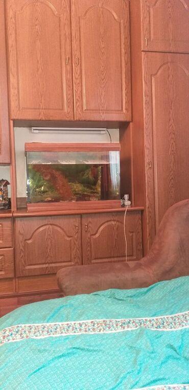 Животные - Военно-Антоновка: Продаю аквариум на 100 литров ширина 40 см. Длинна 65 высота 45 цена