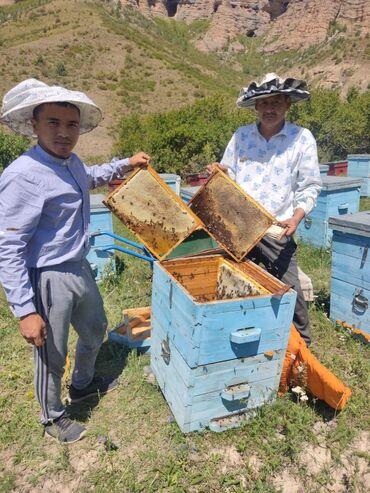 34 объявлений: Продается мёт Токтогулский свой огород 100% чистый с гарантией вёдро