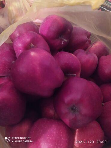 Яблоки привосход высший сорт Иссыкульские