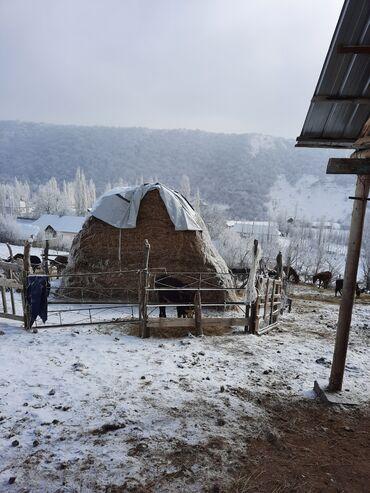 эндик чоп фото в Кыргызстан: Пресс сатылат 100 штук портер мн келип алып кетсенер болот!!! Чоп жакш