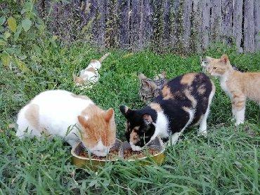 Mačke | Srbija: Poklanjam lepe mace i macice odgovornim vlasnicima i ljubiteljima
