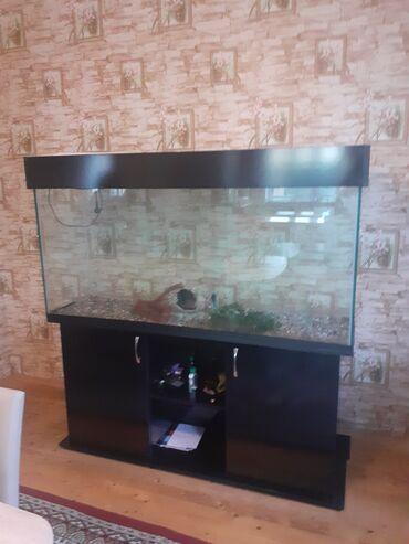 Akvariyom satlr