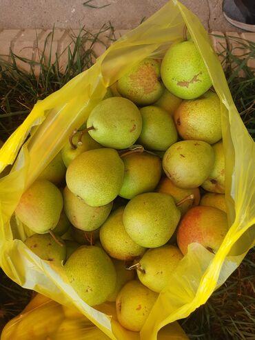 73 объявлений: Лесная красавица продам оптом  Иссыккуль село Фрунзе