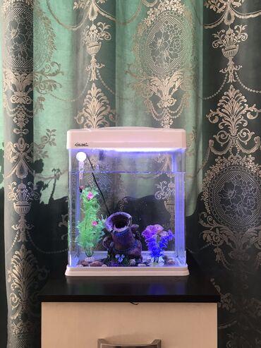 Аквариум с рыбками и т д 5000-с окончательно
