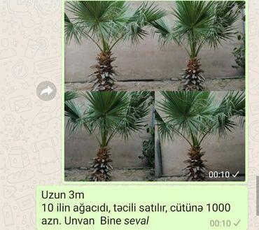 vytyazhka kukhonnaya 1000 kubov в Азербайджан: 1000