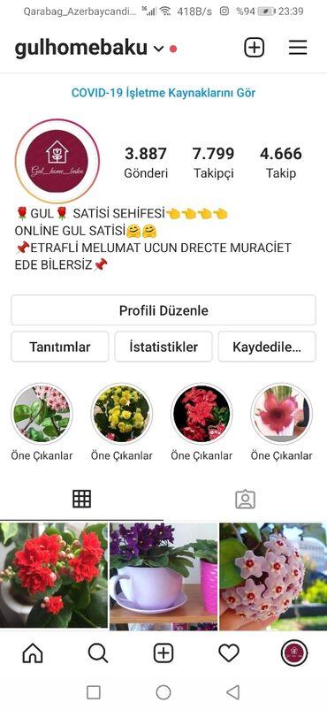 Otaq bitkiləri - Azərbaycan: Instagramda destek olaq zehmet olmasa gulhomebaku sehifesine.bir