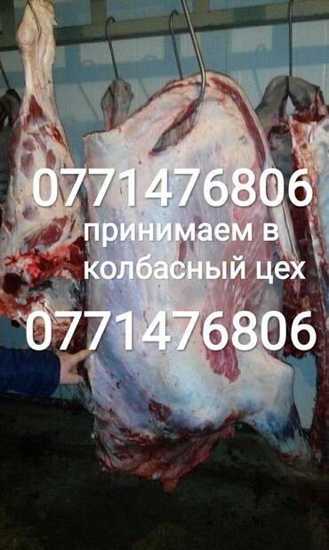 Постоянно скупаем скот для колбасных цехов Звонить в любое время