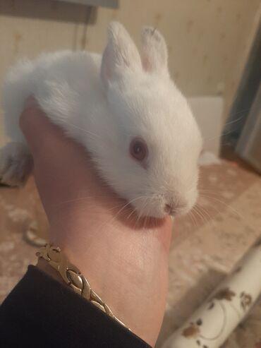 Digər heyvanlar - Azərbaycan: Qırmızı göz dovşan cox şirindilər