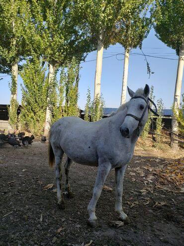 164 объявлений   ЖИВОТНЫЕ: Продаю   Конь (самец)   Конный спорт