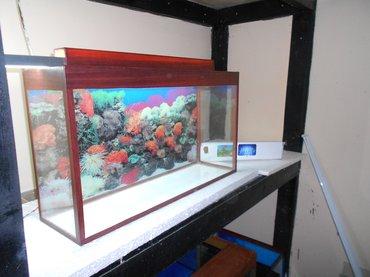 Bakı şəhərində akvarium teze uzunu 70 sm hundurluyu qapaqla 45sm eni  20 sm