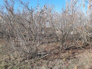 Torpaq sahələrinin satışı - Xudat: Torpaq sahələrinin satışı 13 sot Kənd təsərrüfatı, Mülkiyyətçi