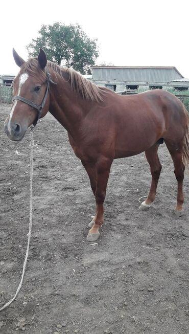 73 объявлений   ЖИВОТНЫЕ: Продаю   Жеребец   Английская   Конный спорт   Племенные
