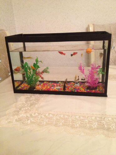 Akvarium.16 balığ var içində.1 i 15 man alınıb.içini təmizliyəni