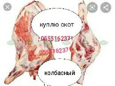 Куплю Вынужденый забой скота в любое время