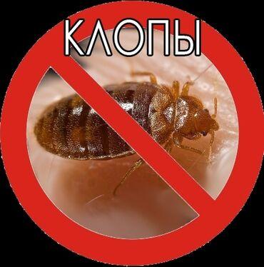 бутыли 20 литров в Кыргызстан: Дезинфекция, дезинсекция | Вирусы, микробы, Обработка деревьев | Подъезды