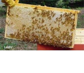 Bakı şəhərində Yuksək keyfiyyətli təmiz dağ balı satılır. Arılar qubada