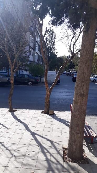 Bakı şəhərində Nizami rayon Neftçilər metrosu yani ümümi sahəsi 11 kv m olan
