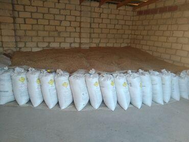 Ev və bağ Qusarda: Buğda satılır temiz normal.10 ton.hamisini alanan razılaşmaq olar