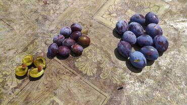 40 объявлений: Овощи, фрукты