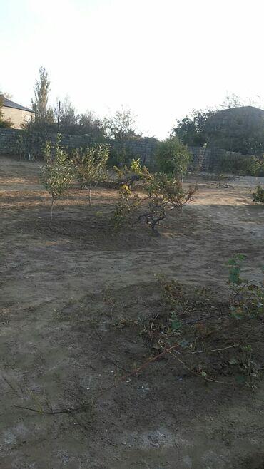 Torpaq sahələrinin satışı - Gürgan: Torpaq sahələrinin satışı 10 sot Tikinti, Mülkiyyətçi