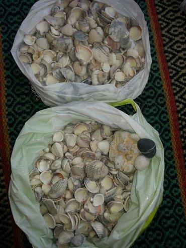 Продаю красивые настоящие ракушки из Средеземного моря! Можно
