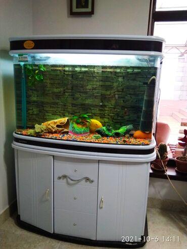 Продаю заводской аквариум с рыбками 230 литров, с внутренним декором