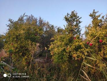 Sumqayt ş Corat baglari 33 ve 21 nomreli mawurut yolunun kenarinda 5