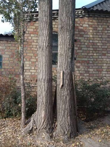 Балки | Береза, Хвоя, Листовые деревья