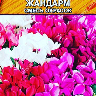 Семена комнатных цветов: примула,цикламен,бегония,бальзамин,глоксиния