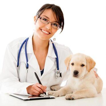 Животные - Кок-Ой: Ветеринар на выезд Работаем со всеми видами животными  Кастрация  Сте