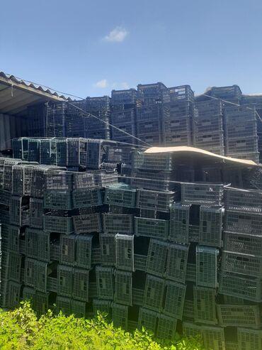 железные-ящики в Кыргызстан: Продаю ящики пластмассовые.5000штук