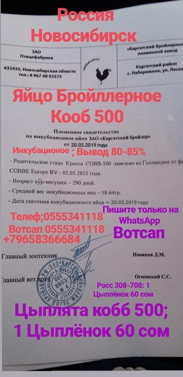 КОББ 500 РОС 308-708 в Саразм